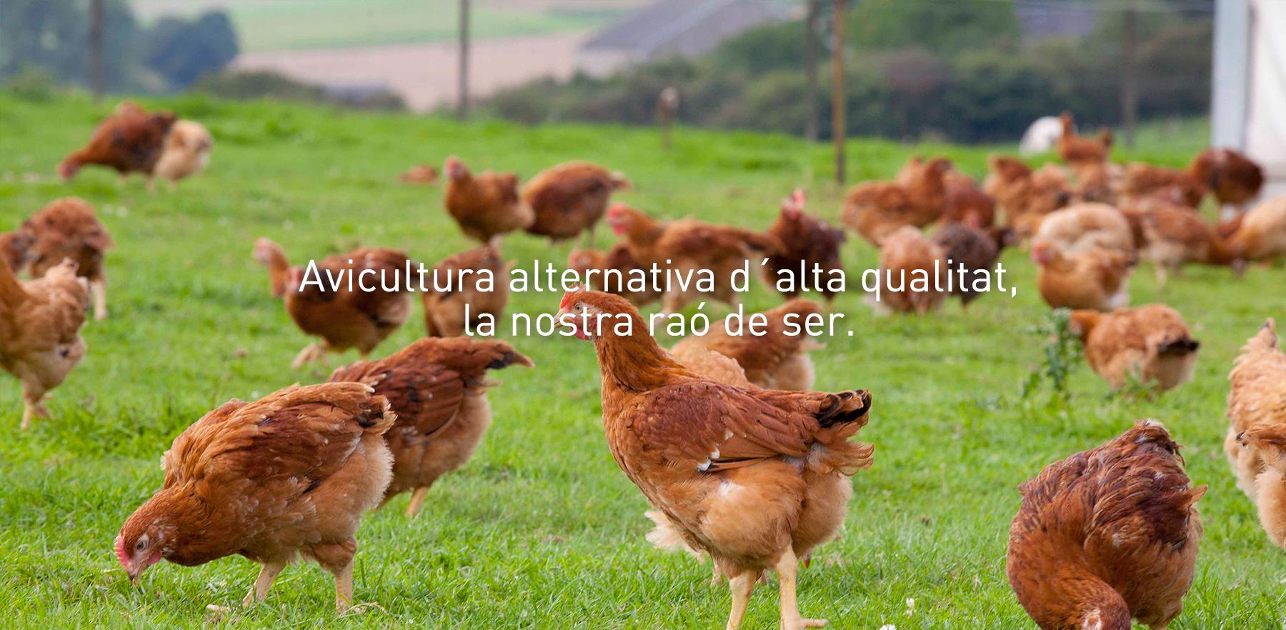 GALLSA, PRODUCCIÓ I VENDA DE PRODUCTES AVÍCOLES ALTERNATIUS
